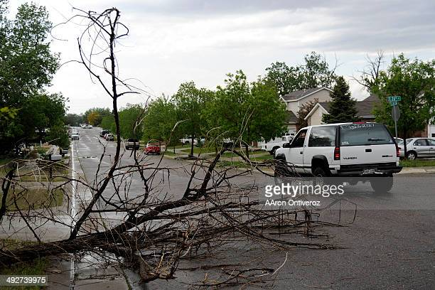 A man stops to look at a downed tree after hail pounded the area near East 26th Avenue and East 26th Place A hail storm hit the Denver metro area on...