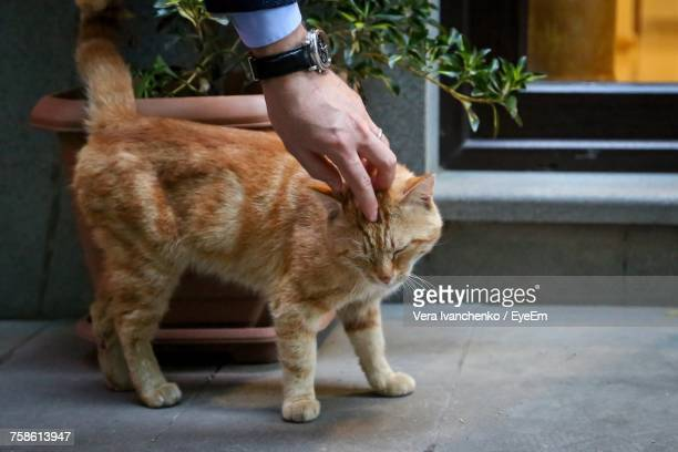 Man Stroking Cat