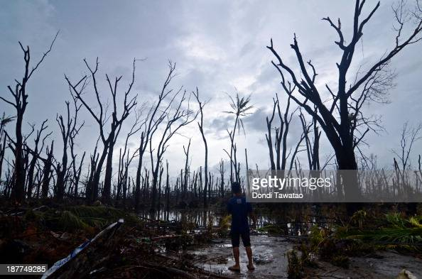 A man surveys felled trees in an area devastated by Typhoon Haiyan on November 12 2013 in Palo township Leyte Philippines Four days after the Typhoon...