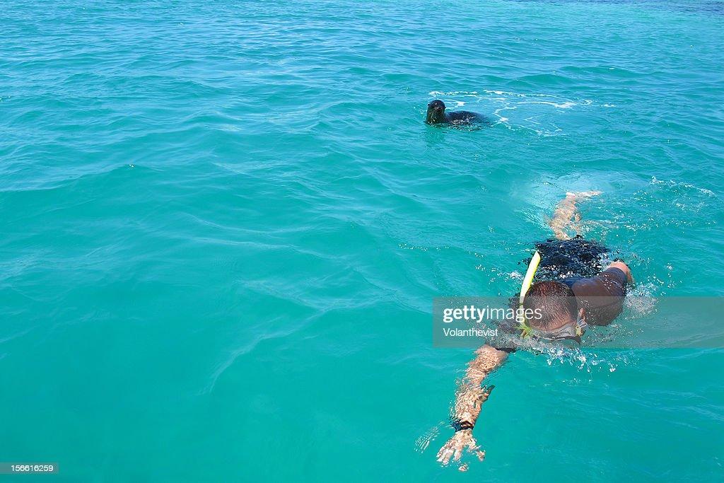 Man swimming with sea lion - Tintoreras tour : Stock Photo
