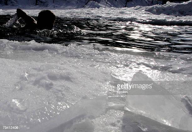 A man swims in an ice hole in a lake in temperatures of 14 degrees Celsius while members of the public swim in icy water in a park on February 24...
