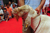 A man takes a goat to join the competition in Linquan County on July 9 2016 in Fuyang Anhui Province of China More than 100 goats competed in the...