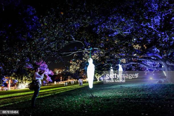 A man takes a photo at the Electric Forest installation ahead of Vivid Sydney at The Royal Botanic Gardens on May 24 2017 in Sydney Australia Vivid...