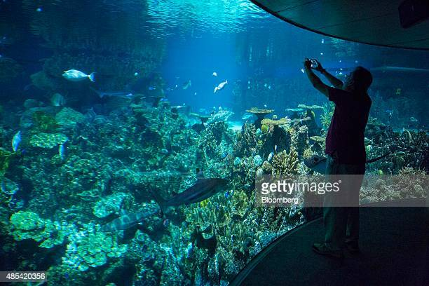 A man takes a photograph of the underwater viewing area at the National Aquarium in Baltimore Maryland US on Wednesday Aug 26 2015 Home flippers...