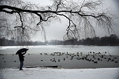 A man takes a picture of ducks and geese at a lake in Brooklyn's Prospect Park following an evening storm on January 24 2015 in New York City The...