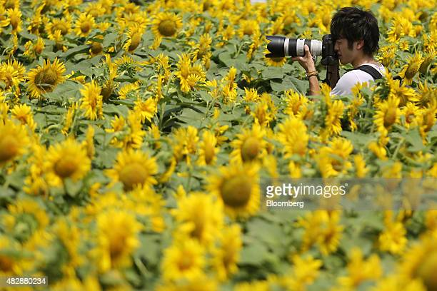 A man takes photographs with a Canon Inc digital single lens reflex camera in a sunflower field in Tokyo Japan on Monday Aug 3 2015 The Japan...