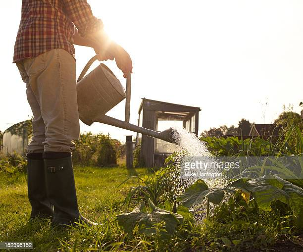 Man tending to plants in allotment