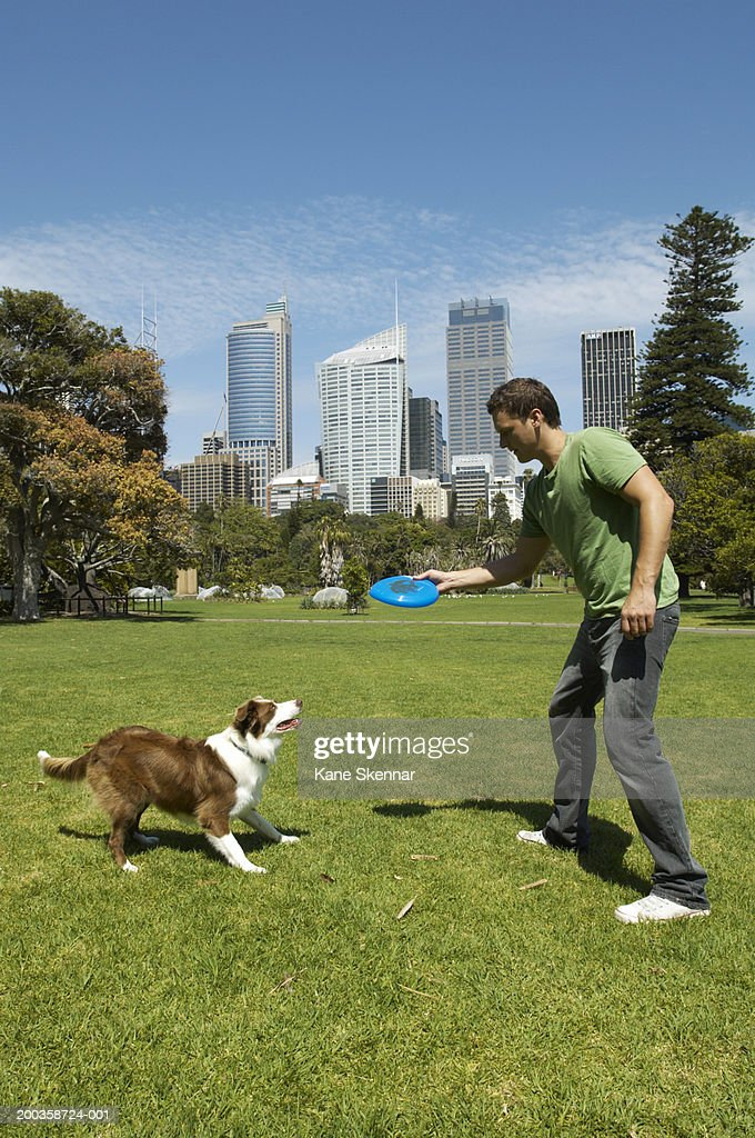 Man throwing flying disc for border collie, side view : Stock Photo