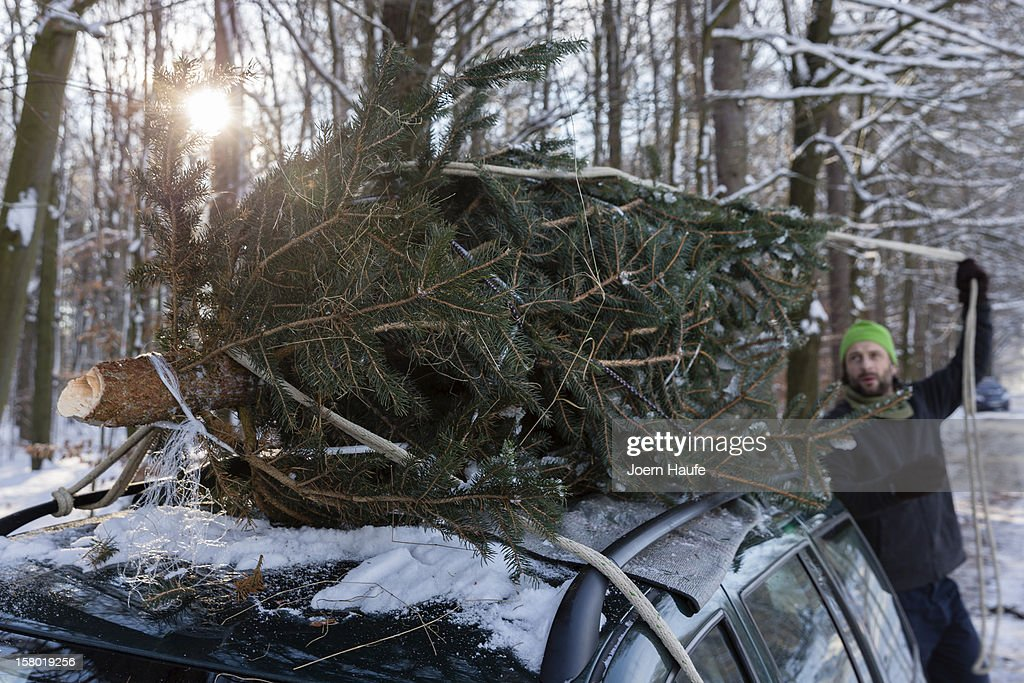 A man ties a Christmas tree to his car after choosing and cutting it down himself at a forest on December 8, 2012 in Fischbach, Germany. Forestry officials in the state of Saxony officially opened the 2012 Christmas tree season for people who want to retrieve their tree from designated forests rather than just buying it readily cut.