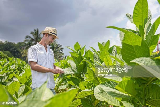 青空のフィールドにタバコ葉に触れる男