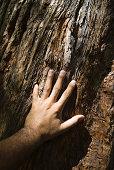 Man touching tree bark