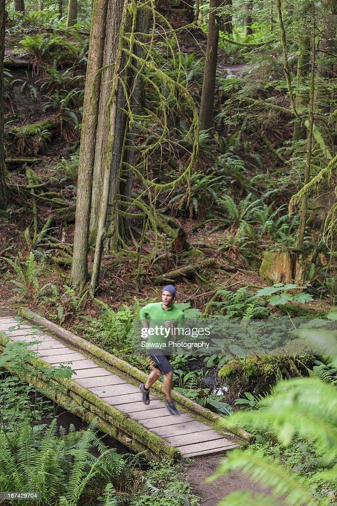 A man trail runs through old growth forest : Stock Photo