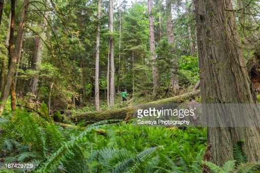 A man trail runs through old growth forest : Foto de stock