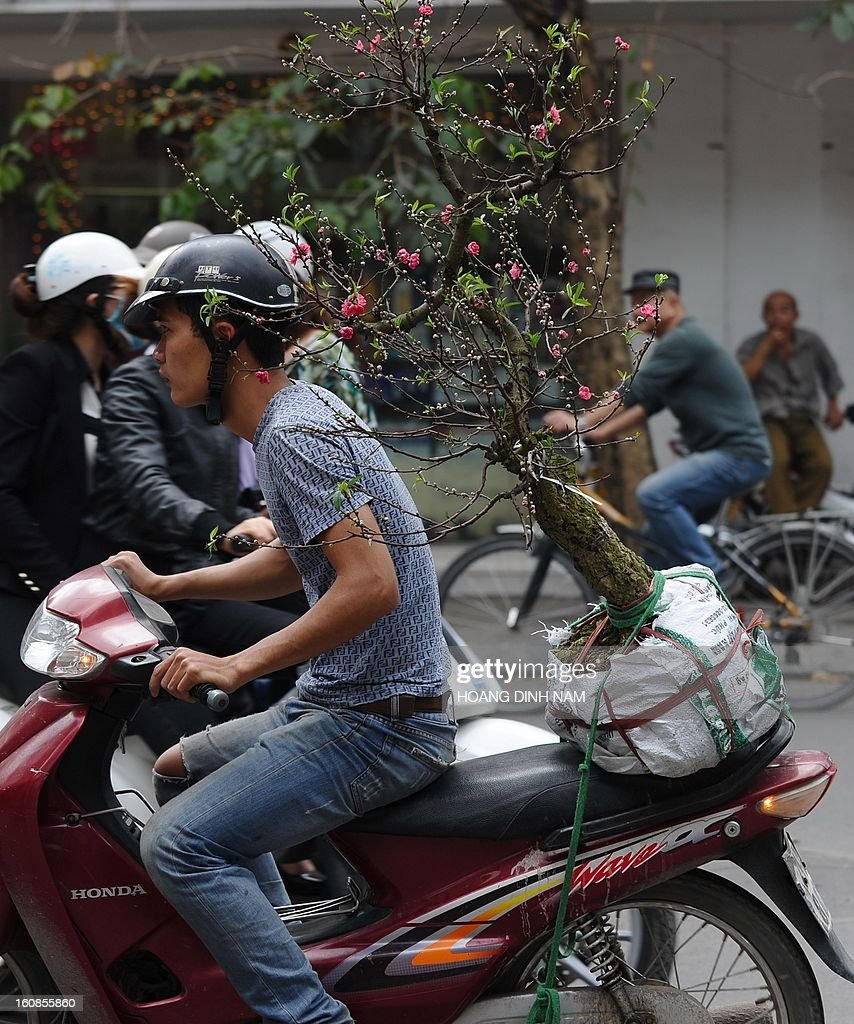 A man transports a peach blossom tree home on the back of his motorcycle as Vietnamese do last-minute shopping ahead of the start of the Lunar New Year, known in Vietnam as 'Tet' in downtown Hanoi on February 7, 2013. Vietnamese will have a nine-day long Tet holiday this year, the longest ever decided by the Vietnamese government. AFP PHOTO / HOANG DINH Nam