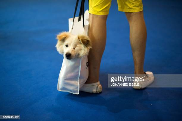 A man transports his dog in a shopping bag at the Pet Fair Asia 2014 in Shanghai on August 23 2014 The fair for pet lovers and owners opens from...