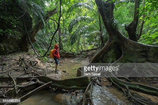 Man trekking through dense tropical Jungle scenery including a looking glass mangrove tree