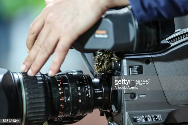 A man tries to clean up his camera from colony of bees before the Ziraat Turkish Cup semi final soccer match between Medipol Basaksehir and...