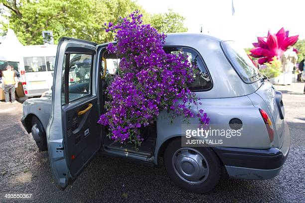 A man tries to squeeze a plant into a taxi after making a discounted purchase from the final day of the Chelsea Flower show in London on May 24 2014...