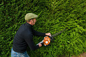 A man trimming a thick green hedge with a motorized hedge trimmer.