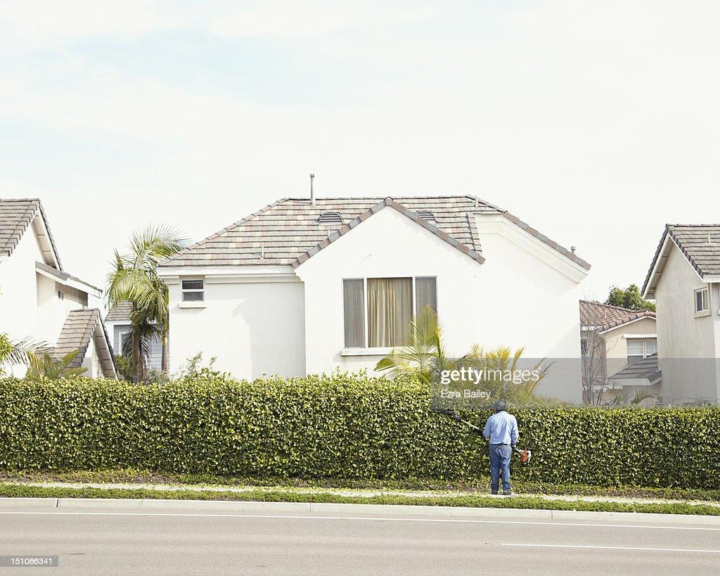 Man trimming hedge in suburbia