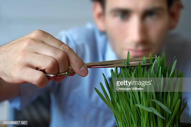 Man trimming plant (focus on plant)