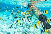 Man underwater with colorful fishes, Bora Bora