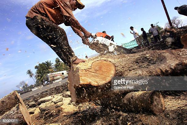 A man uses a chainsaw to cut through a tree that had fallen during the tsunami January 17 2005 in Banda Aceh Indonesia The province of Aceh one of...