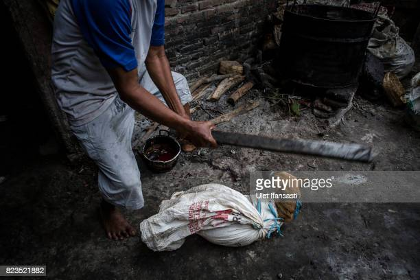 A man uses a stick to kill a dog before slaughtering it at a dog meat butchery house on July 27 2017 in Yogyakarta Indonesia Indonesians have seen a...