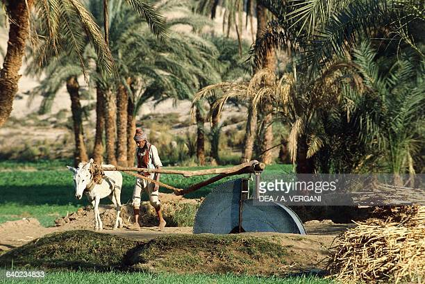 A man using a mule to operate a well with a water wheel Nile Valley Egypt