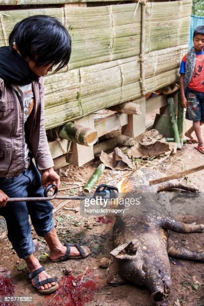 Man using blow torch to burn sacrificed pig