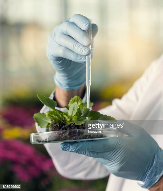 Man using pipette on plant sample in greenhouse