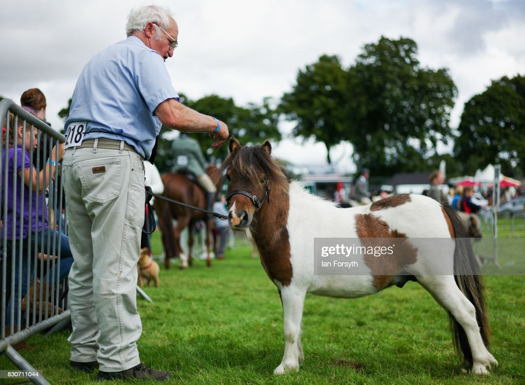 A man waits with his Shetland Pony before competing during the 194th Sedgefield Show on August 12, 2017 in Sedgefield, England. The annual show is held on the second Saturday each August and is a celebration of agricultural and country life. It offers a range of competitive classes which represent the many skills and aspects of life in the local community, and the countryside including animal classes, vintage machinery and handicrafts.