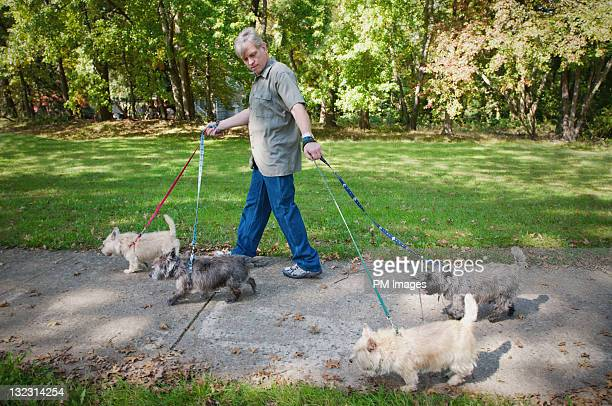 Man walking 4 dogs