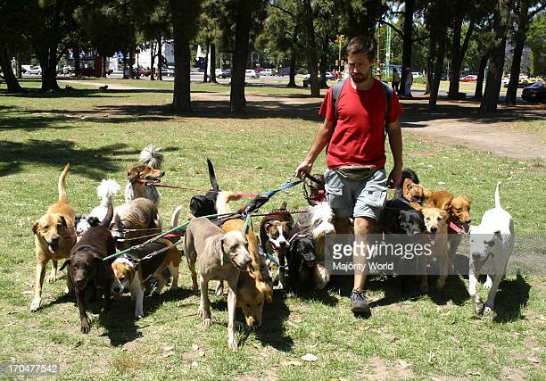 A man walking a pack of dogs in a park in Buenos Aires Argentina May 3 2005