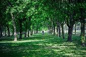 Man walking between trees