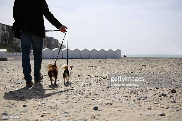 Man walking Chihuahua dogs on beach, Normandy