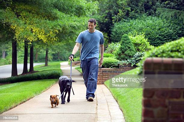 Man walking dogs down sidewalk