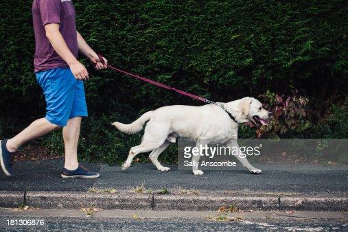 Man walking his pet dog : Stock Photo