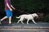Man walking his pet dog