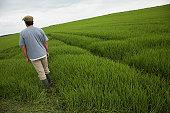 Man walking in field back view