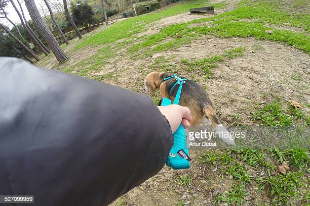 Man walking the dog with leash from first person view Pov