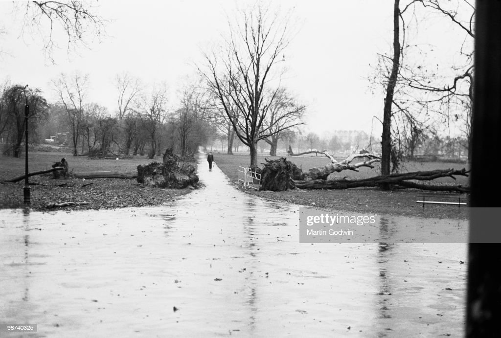 Man Walking though Clapham Common with fallen trees after the Great Storm, November 1987.