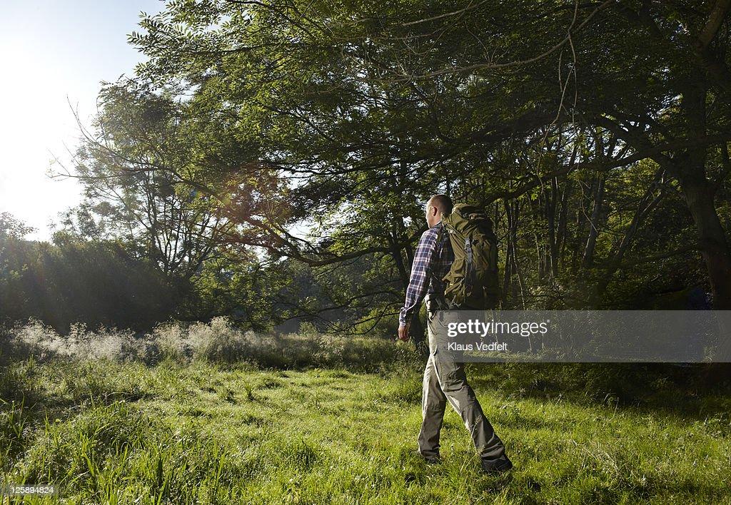 Man walking towards the sunrise threw forrest : Stock Photo