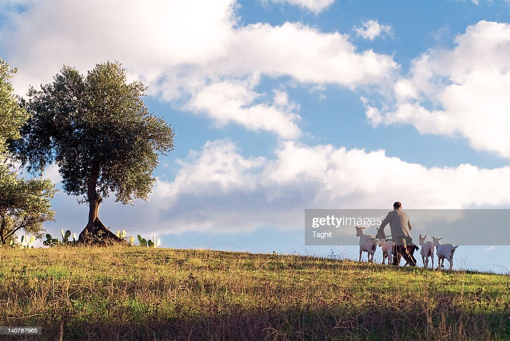Man walking with his goats on mountain : Stock Photo
