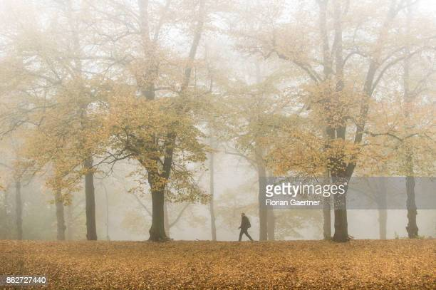 A man walks along an alley in the foggy morning on October 18 2017 in Berlin Germany