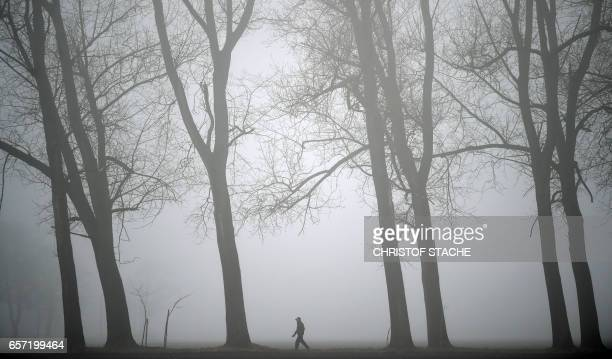 A man walks between trees during a foggy weather morning with temperatures by 6 degrees near the small village Groebenzell near Munich southern...