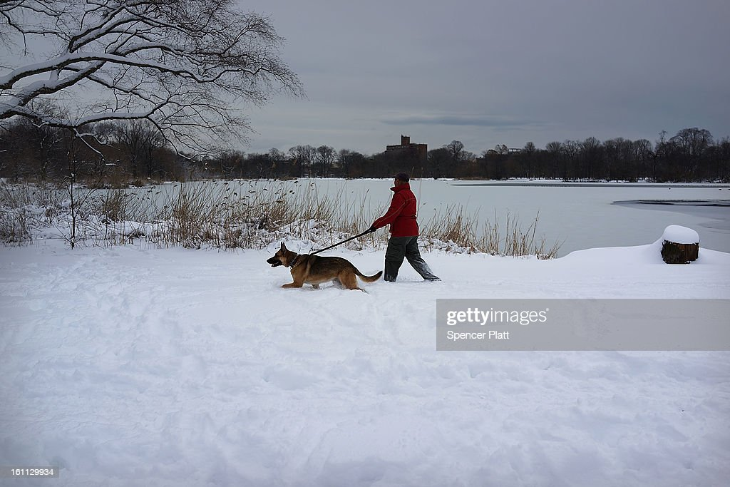 A man walks his dog in Prospect Park in Brooklyn the morning after a massive snow storm on February 9, 2013 in New York City. New Yorkers woke up to over 10 inches of snow Saturday morning while parts of New England received over thirty inches following a storm that brought high winds and blizzard like conditions to the region.