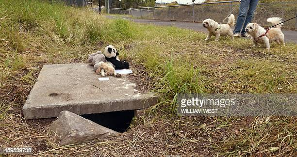 A man walks his dogs past a 25metredeep deep drain in the outer Sydney suburb of Quakers Hill on November 25 following an Australian mother being...