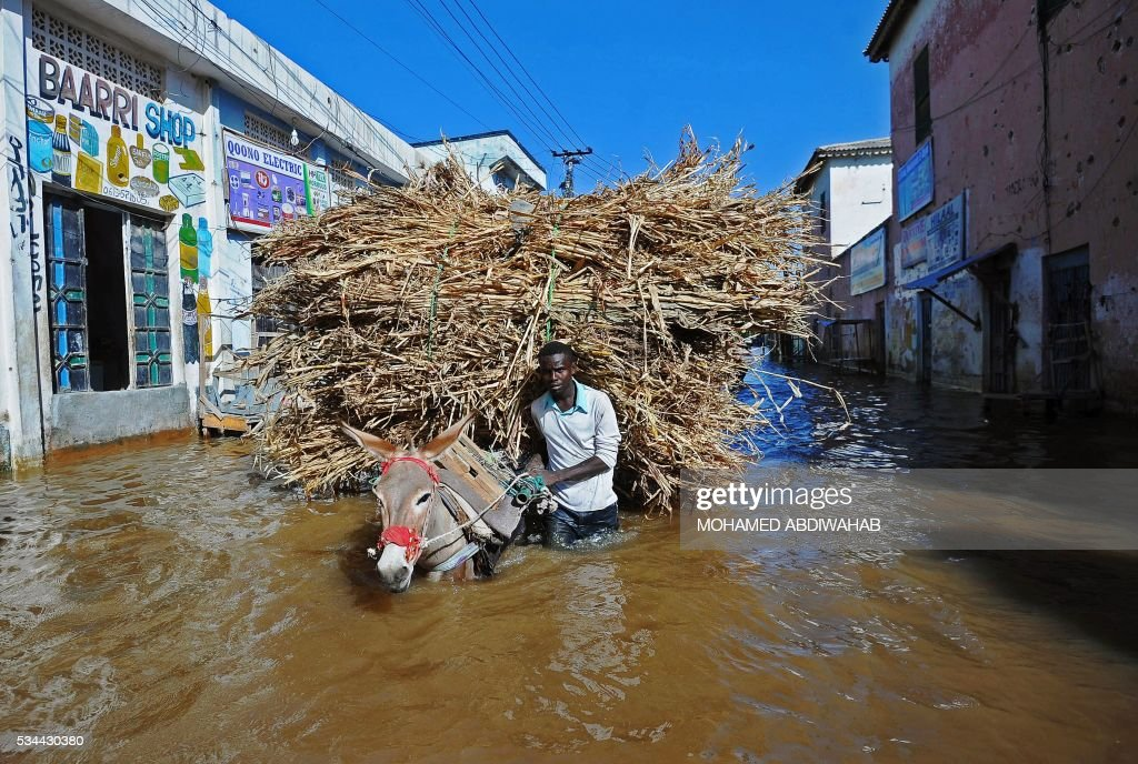 A man walks his donkey and its load through flooded streets Beledweyne, north of Mogadishu on May 26, 2016. Hundreds of families have been forced out of their homes following flash floods in Beledweyne after torrential rains pounded the area in the last few days. The heavy rains led to the bursting of River Shabelle which caused massive floods in residential areas along the river. / AFP / MOHAMED