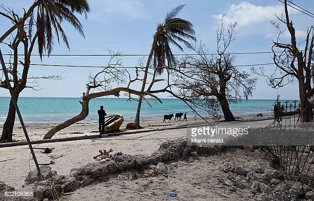 A man walks his livestock on the storm battered beach in Port Salut Haiti on October 11 2016